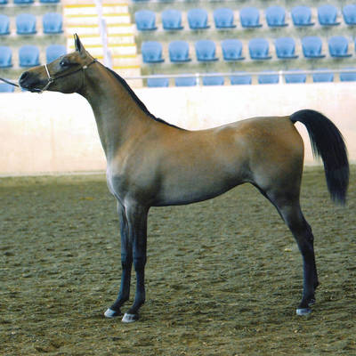 MULAWA ALEXA as a Yearling