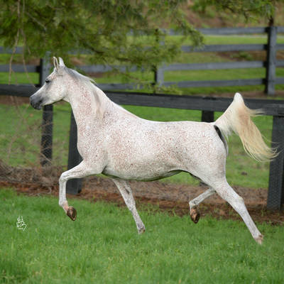 CHANCE TO DANCE | Dam of KLASSICAL ENCHANTMENT MI
