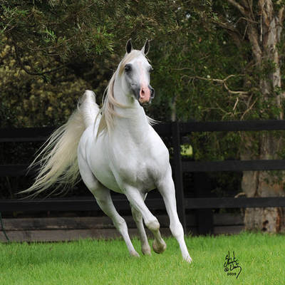 KLASS | Sire of KLASSICAL ENCHANTMENT MI
