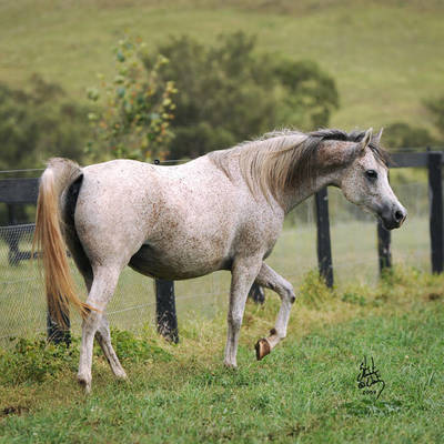 CHANCE TO DANCE | Dam of KASPER MI