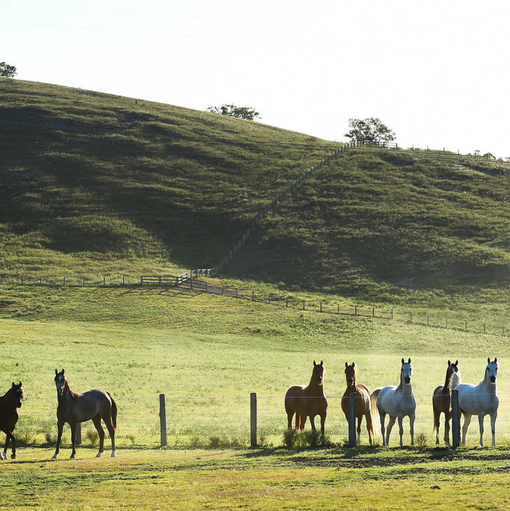 Mares in paddocks