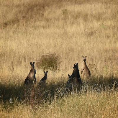 Wildlife at Cronk Coar