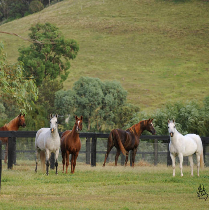 Mares in the Alabama paddocks