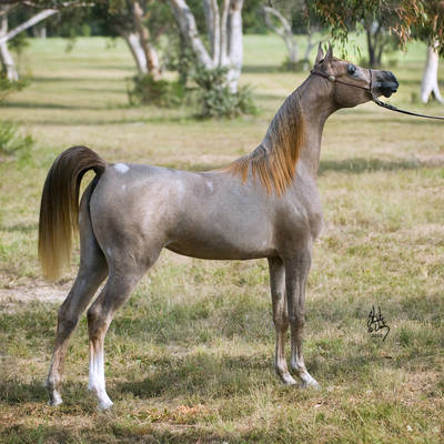 DESTINE TO BE MI | Dam of FALZON DESTINEE