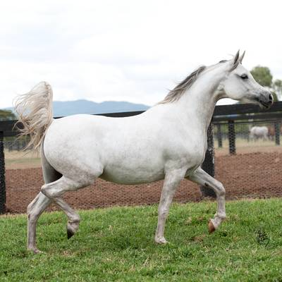 AUDACIA | Dam of KAPTIVATE MI
