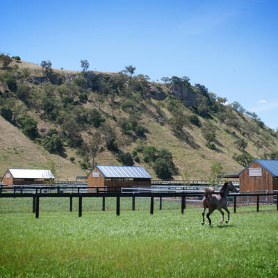 Stallion Paddocks at Cronk Coar