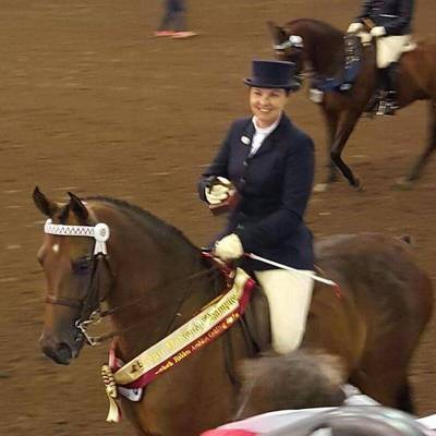 Bronze National Champion Ridden Arabian Gelding DARK KNIGHTMI