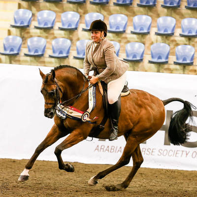 Silver National Champion Ridden Arabian Gelding FAMES PHANTOM MI