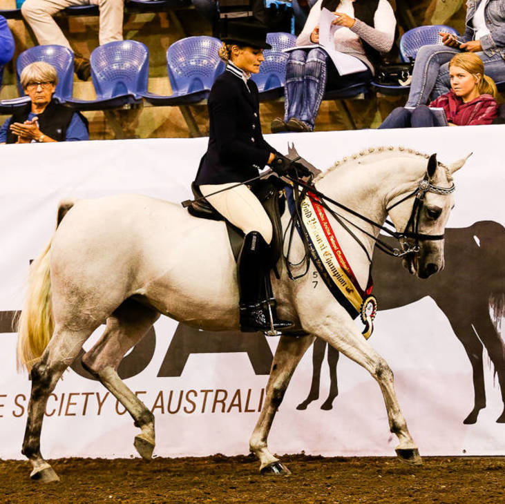LOVER GIRL FF | Gold National Champion Ridden Arabian Mare