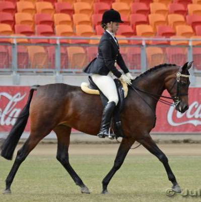 FOR CHOICE | Reserve National Champion Ridden Arabian NPTR