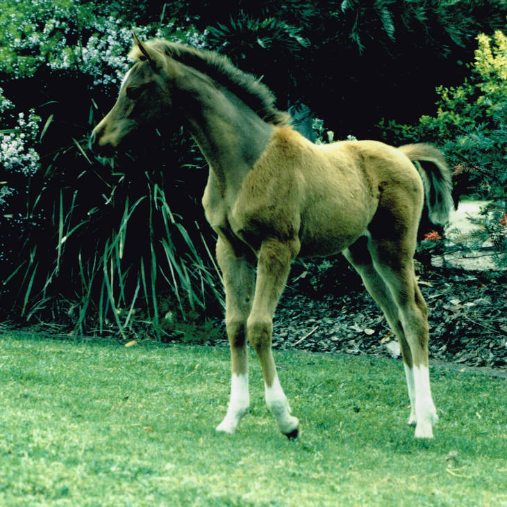 MULAWA CLAIM TO FAME as a foal