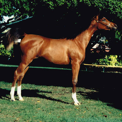MULAWA CLAIM TO FAME as a Yearling