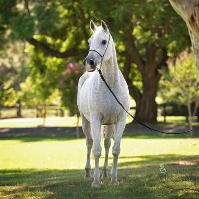 MULAWA CHANCE | Dam of CHANCING