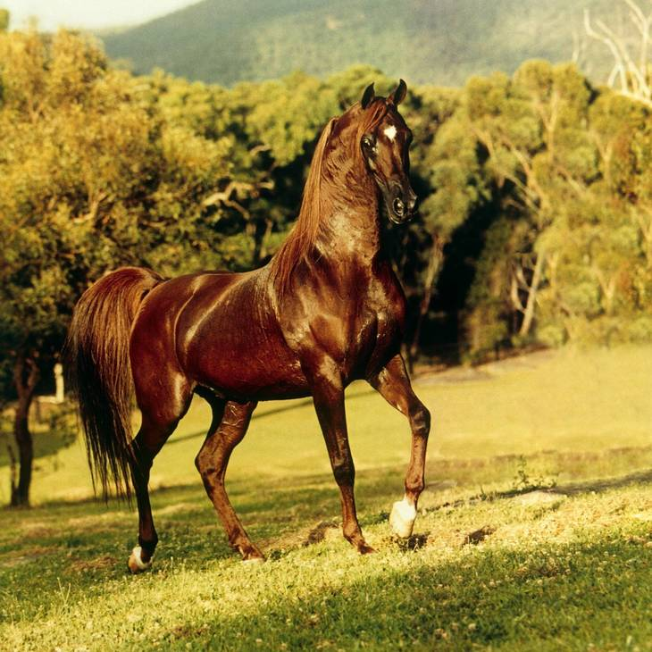 VISION | Sire of FEATURE