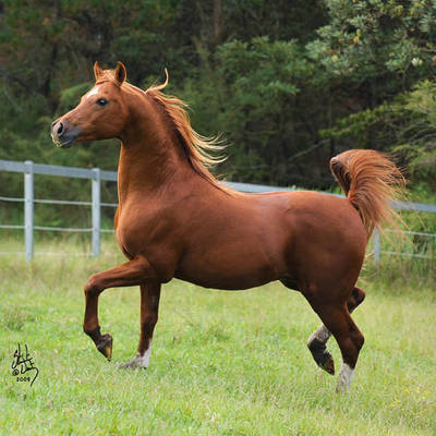 GLF APOLLO | Sire of PREVAIL