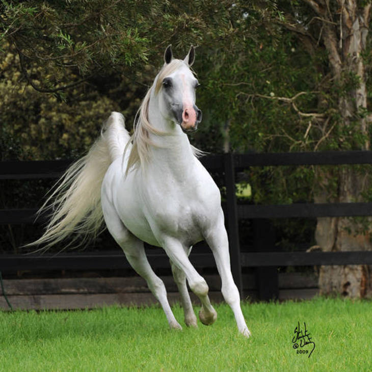 KLASS | Sire of MI KLASSIC SPLENDOR