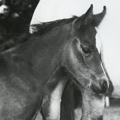 FEATURE as a foal