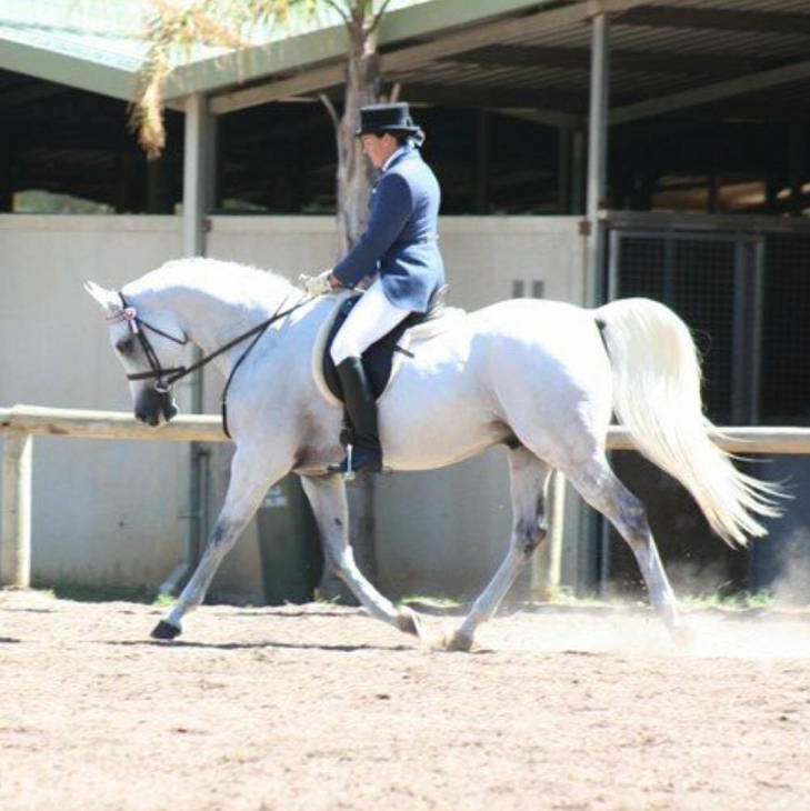 MAGNATE under saddle