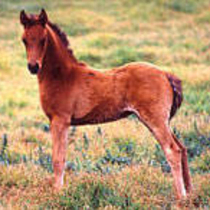 PARKVIEW AUDACIOUS as a foal