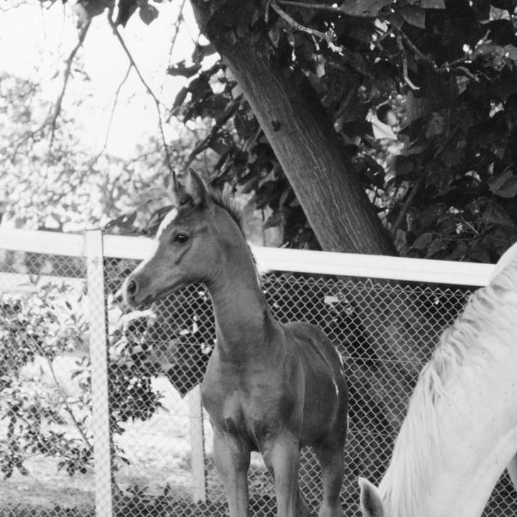 KLASS as a foal