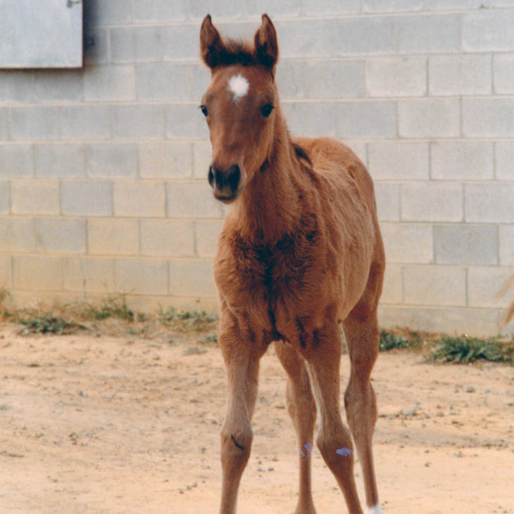 MULAWA EUNIQUE as a foal