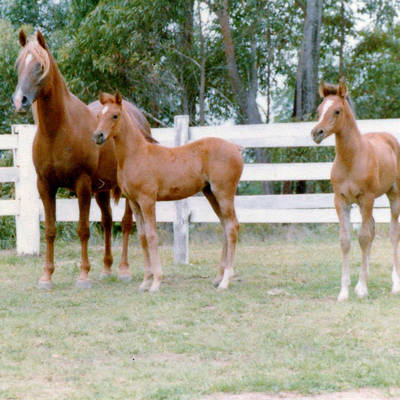 MULAWA THE QUEST as a foal