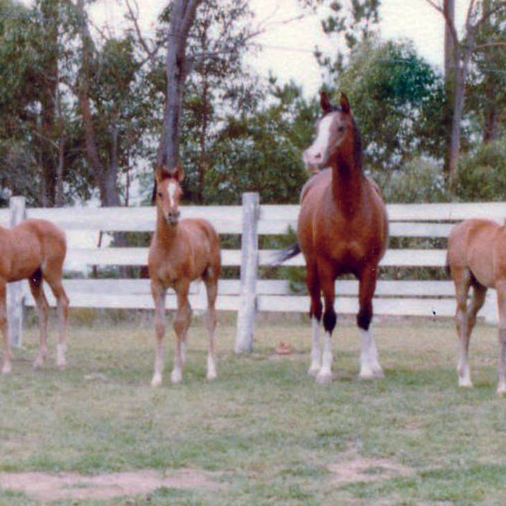 MULAWA THE QUEST with GROJECCA as a foal