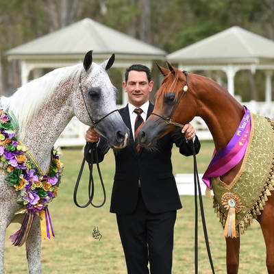 CHANCE TO DANCE & A VISION MI | National Stud Show Champions