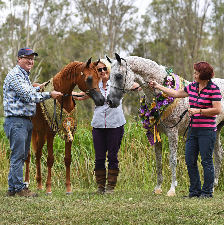 A VISION MI & CHANCE TO DANCE | National Stud Show Champions