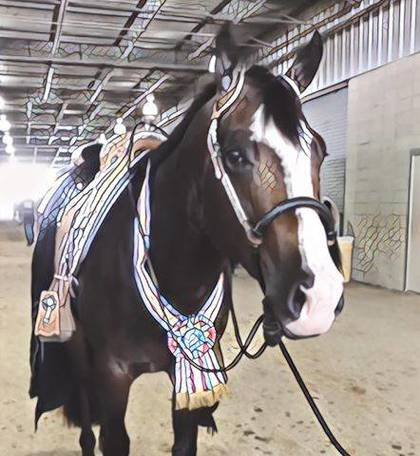Ohio exhibitors place at the top during NSBA World Show
