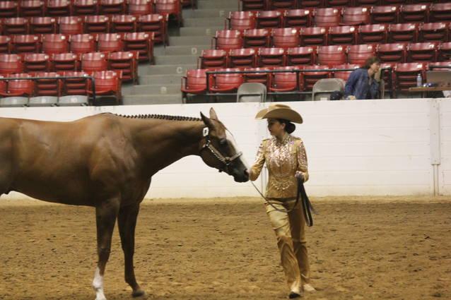 Eastern Ohio Quarter Horse Show update