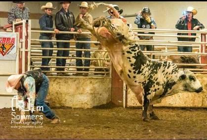 Buckin' Ohio Brings Top Notch Bulls to Congress