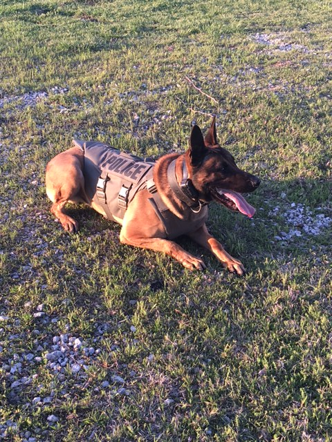 ONPD narcotics dog to receive body armor