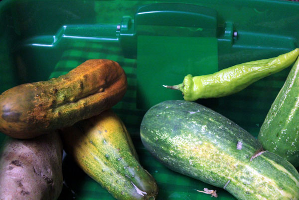Community gardens being grown by Osage Nation TA–WA AmeriCorps