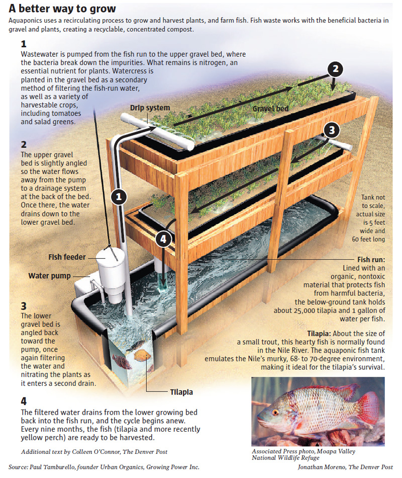Aquaponics project another step in food sustainability