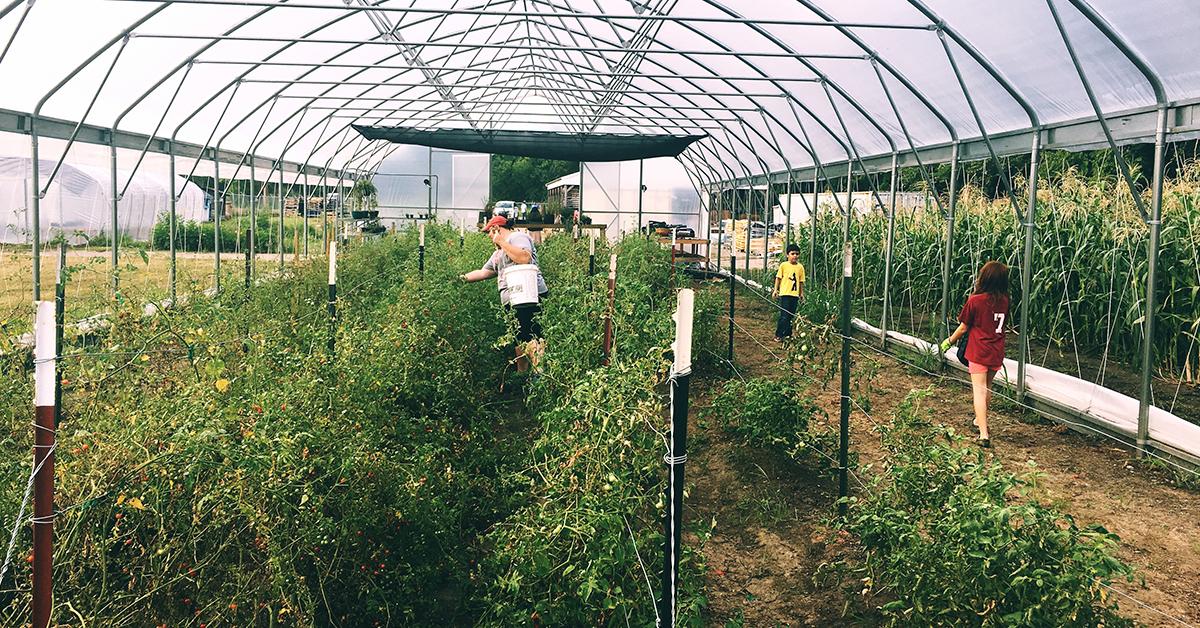 Bird Creek Farms has big plans for 2020