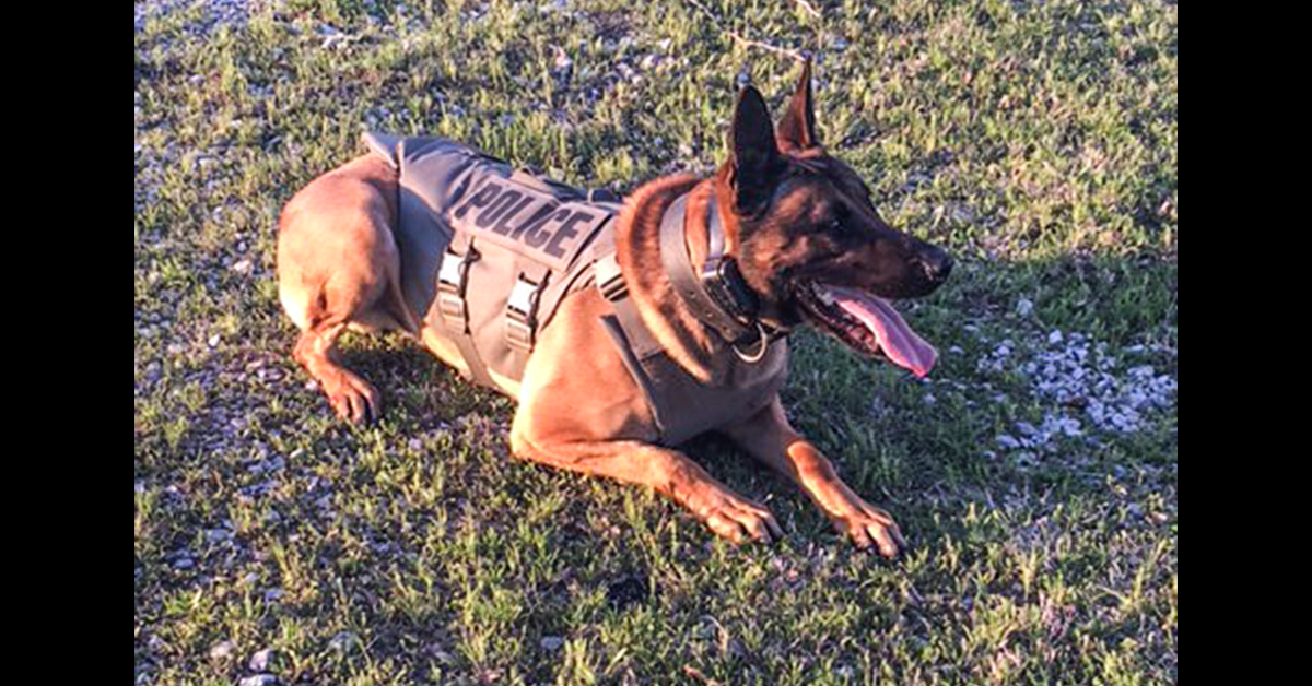 ONPD K9 Unit helps apprehend three suspects after high-speed chase