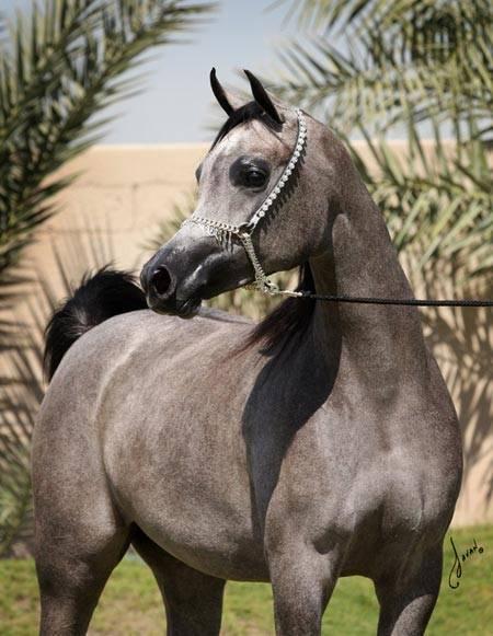 SHAHD AL HAWAJER