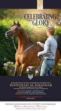 Silver Menton Champion - Rshediah Al Khashab