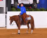Americas Supermodel wins All American Quarter Horse Congress