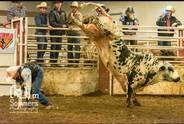 PBR Touring Pro Highlights Bulls at Congress