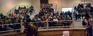 New Yearling Congress Super Sale Generates over $60,000 for 2017 Purse