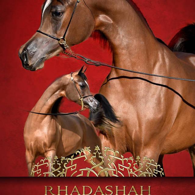 Welcome to the United States sweet Rhadasha Arabco