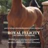 Royal Felicity heads overseas!
