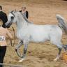 2015 Arabian National Breeder Finals