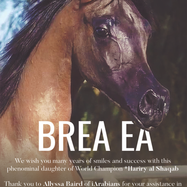 Royal Arabians Salutes the new Owners of the Beautiful Brea EA