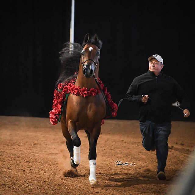 New Years Farm Tours @ Royal Arabians