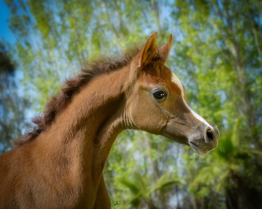 Manar Jaafar as a foal