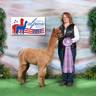 American Alpaca Showcase 2017