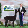 Illinois Alpaca Show Reserve Champion Black Female